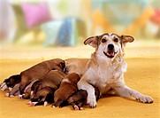 animal,dog,half-breed,puppy,22 days