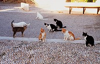 several cats on square