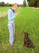 dog education : woman and Labrador Retriever puppy - ´sit down´