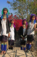 Myanmar, Shan State, Ladies from Paudaung tribe AKA Long Neck tribe