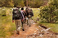 A group of men hiking through the woods