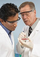Scientists looking at petri dish