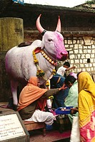 jyotiba temple , kolhapur , statue of cow being worship , maharashtra , india