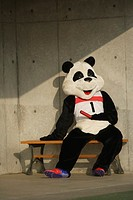 Panda Taking a Break