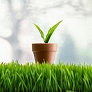 Potted Plant in Grass