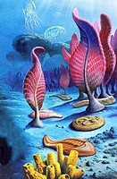 Ediacaran organisms  Artwork of organisms that existed during the Ediacaran period around 635 to 542 million years ago  This period of the Proterozoic...