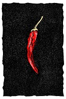 Chilli pepper  Coloured woodcut artwork of a chilli pepper, a fruit of the chilli plant Capsicum sp   Chilli peppers are edible and are used in cookin...