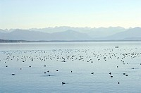 Germany, Bavaria, Starnberg Lake in the morning
