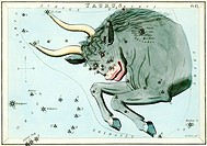 Taurus constellation  Illustrated card from a 19th century astronomical teaching aid called Urania´s Mirror, after the Greek muse of astronomy  There ...