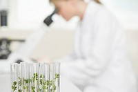 Scientist using microscope in laboratory focus on plants in test tubes in foreground (thumbnail)