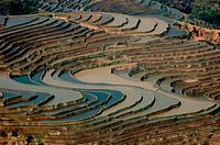 Rice fields. Yunnan. Yuanyang. China