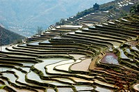 rise terrace in China Yunnan Yunyang