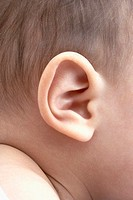 A baby's ear
