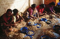 ladies sorting prawns , Howrah , west bengal , india