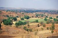 trees , mandu DT , dhar , madhya pradesh , india