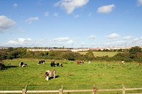 Housing Estate with Agricultural Scene, Waterford City, Ireland