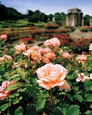 Dublin Parks, National War Memorial Gardens, Islandbridge,