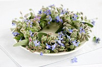 Borage wreath on a plate