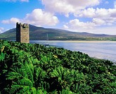 Wildflowers Garden Escapee!, Gunnera Kildownet Castle, Achill Island Co Mayo,