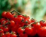 Vine tomatoes and cherry tomatoes