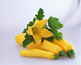 Yellow courgettes with flower and leaves