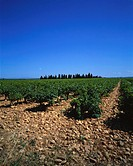 Vineyard near Tavel, Gard region, Rhone Valley