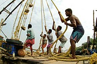 Huge fishing nets are being raised in Fort Cochin, Kerala. India