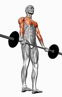 Biceps curl Part 2 of 2