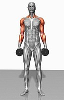 Dumbbell shrug exercise Part 2 of 2