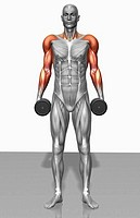 Dumbbell shrug exercise Part 1 of 2 (thumbnail)