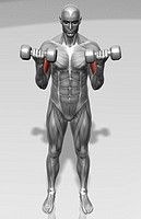 Standing biceps curl Part 1 of 2