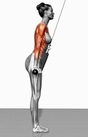 Triceps push down