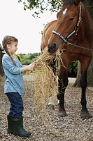 Girl 5-6 feeding horse hay outdoors (thumbnail)