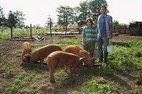 Father and son 7_9 with pigs in sty portrait