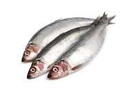 Herrings, an oily fish, on white background