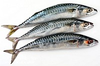 Three MacKerel Fish Cut Out