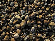 Pebbles on the beach, Whitstable , Kent