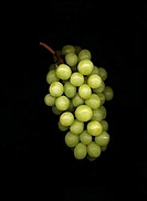 Vitis vinifera, Grape