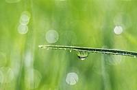 Grass, Grass