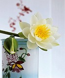 White water lily in a tea caddy
