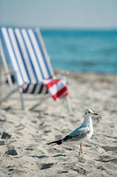 Gull and deckchair on the beach