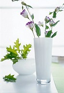 Lisianthus in a white glass vase