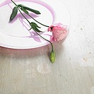 Eustoma blossom on a pink plate