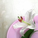 Lily blossom on a light violet plate