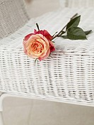 Rose on a basket chair