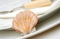 Place setting with a shell