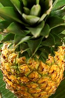 Pineapple