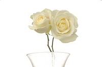 Two white roses in a glas vase