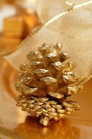 Golden fir cone