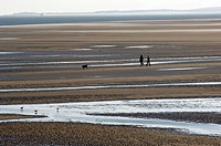 Terschelling, people walking the dog on the Noordsvaarder tidal plate